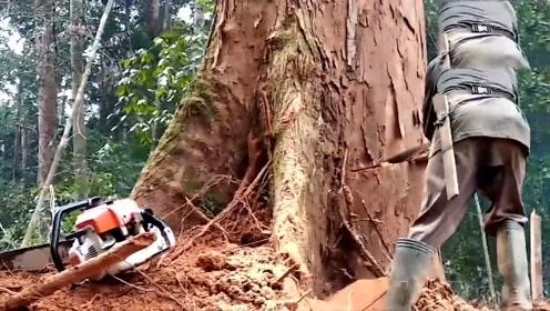 看阿富汗伐木工是如何伐树的,这方式还真少见