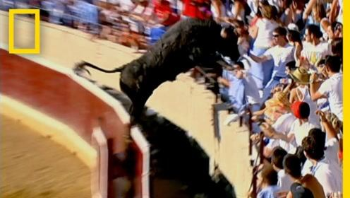 斗牛场发生恐怖一幕,观众吓得魂飞魄散,这下真的是它的主场了