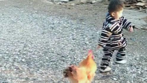 熊孩子没事捉弄公鸡,结果被公鸡一顿教训,看一遍笑一遍!
