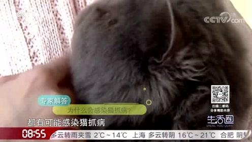 兄妹俩同时发热 竟与猫有关?