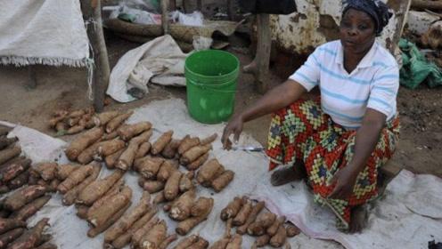 8亿非洲人的主粮,浑身上下都有毒素,到中国却成抢手好货!