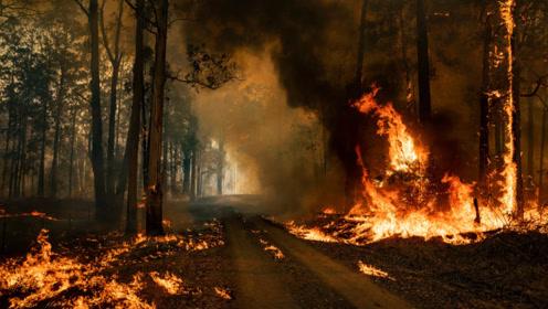 """澳大利亚遭遇""""灾难性""""野火 悉尼周边地区进入紧急状态"""