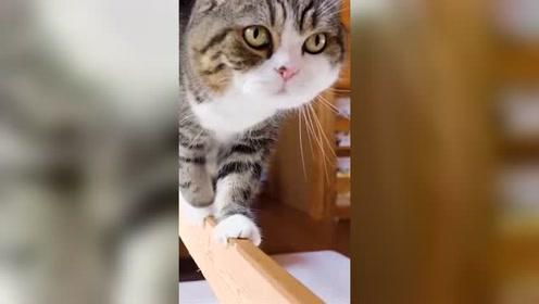 猫的平衡感到底有多强