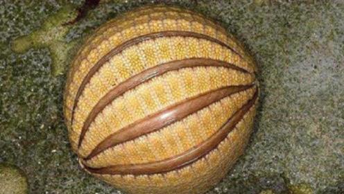 """男子爬山发现了一个""""球"""",好奇踢了一脚,最后却被吓到了!"""