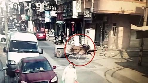"""福建街头现""""牛魔王""""!监拍:牛失控马路狂奔 撞坏路边轿车逃逸"""