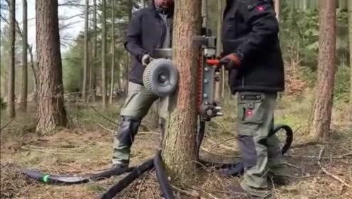 窜天猴枯枝修剪机,上下一来回枯枝就没了,这效率没话说
