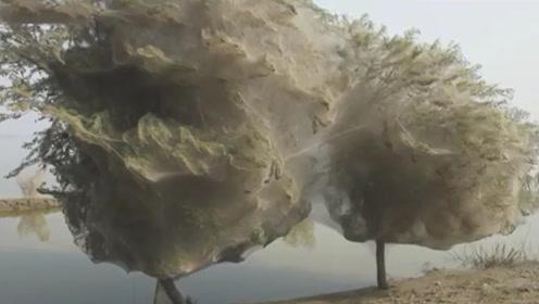 洪水过后,村庄的树变得很奇怪,专家看后脸色一变:立即逃走!