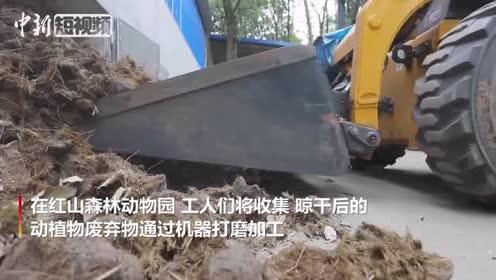 """南京一动物园日产粪便660余斤看其如何""""变粪为宝"""""""