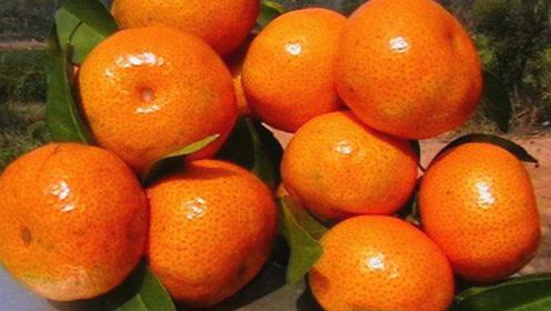"""沙糖橘甜不甜,死记这3个""""小机关"""",一挑一个准,好吃到爆"""