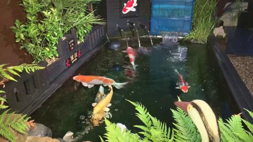 日本人打造的露天锦鲤池,第一感觉太棒了,让人看了半天都不想走