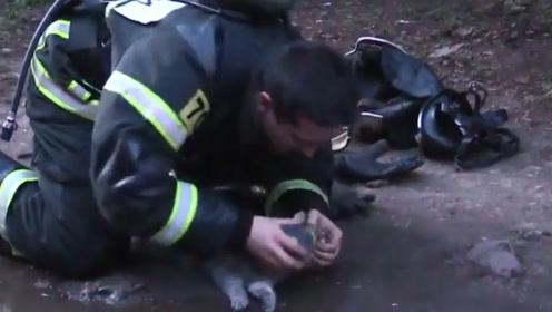 暖心一幕!大火中救出奄奄一息的小猫 俄消防员跪地为小猫输氧