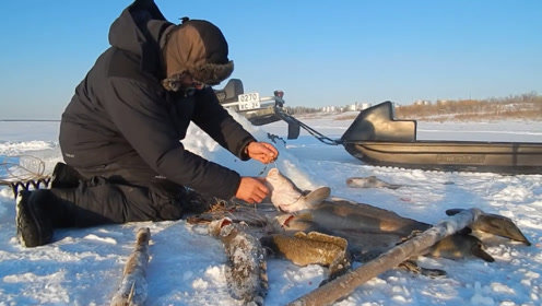 开着雪地摩托去冰钓,一串钩放下去,大鱼一条接一条钓上来