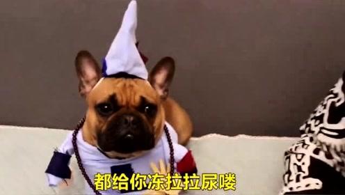 男子浑身发抖,去问狗狗原因,狗狗:该穿秋裤了