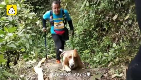 狗界冠军!狗狗陪主人完成31公里越野跑,曾参加4次马拉松
