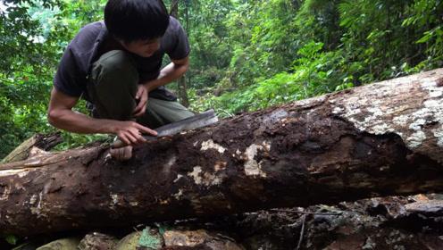 小哥丛林生存,敲开枯树皮抓虫子吃,蛋白质含量超丰富