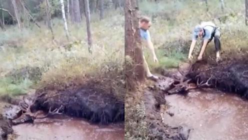 暖心 四名男子合力救出深陷泥潭的牡鹿