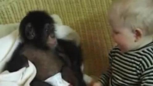 """猩猩和婴儿一起长大,认为自己是人类,9个月后专家""""被迫""""终止实验!"""