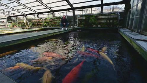 五颜六色的大肥锦鲤正在悠哉嬉戏,此时此景,估计你都想下水抓它们