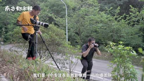"""广州纪录片团队深入""""蛇岛"""",追寻野性动物邻居的自然之美"""