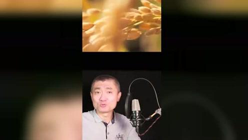 男子配音英文版舌尖上的中国 网友:一张嘴心都化了