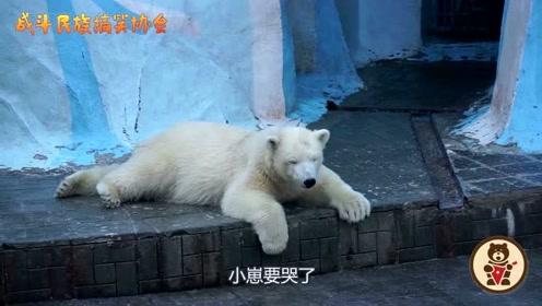 心疼宝宝!北极熊宝宝撒娇要和妈妈玩,妈妈一脸嫌弃