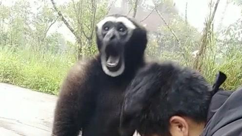 这只猴子给我找跳蚤,居然还大声叫了起来,网友:真是好可爱啊!