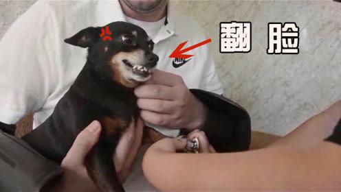 铲屎官给狗子剪指甲,过程中狗子很淡定,剪完之后却翻脸不认人?