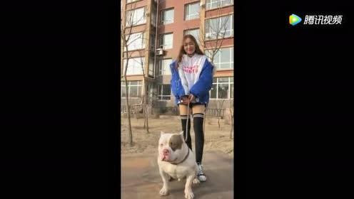 女孩出门牵着这种狗狗!谁也不敢靠近一步