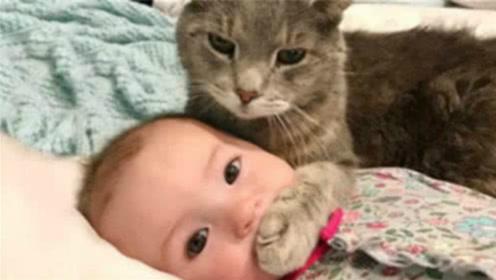"""揭秘!猫为什么会对""""婴儿""""更有忍耐亲和力?看完心头一暖"""