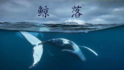一鲸落,万物生!鲸鱼的死亡是地球上最慷慨的馈赠