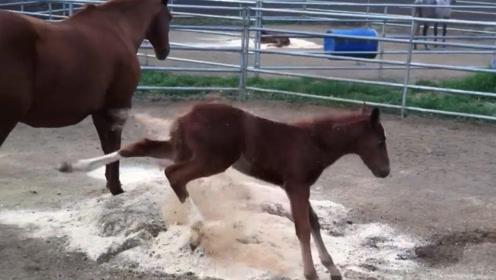 小马故意把灰往妈妈身上踢,母马很生气,下一秒忍住别笑