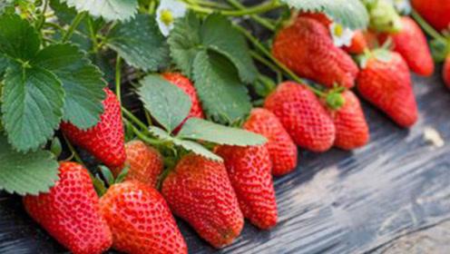 你会挑草莓吗?内有空腔或者是有洞建议不要买
