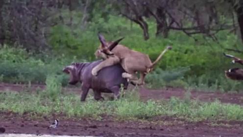 狮子:别以为我怕你,好吧我确实怕你,别揍!