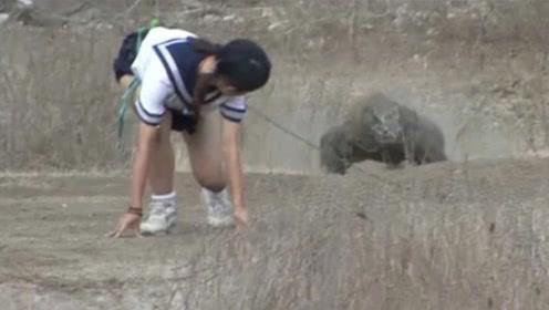 日本女子挑衅科莫多巨蜥,镜头记录全程,看完让人后怕!