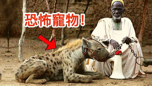 你根本不敢靠近的动物,居然有人当宠物!