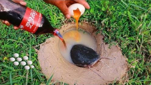 暴雨过后,男子往洞穴内猛灌可乐鸡蛋,下一秒里面的家伙乖乖就范