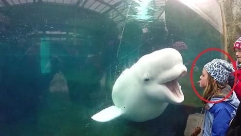 白鲸吓人从未失手,万万没想到,却败在一个小女孩手里