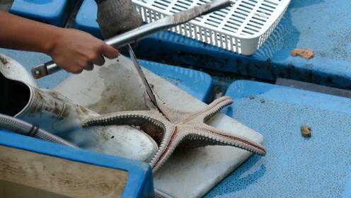 渔民捕到一只海星,一刀下去,意外的事情发生了