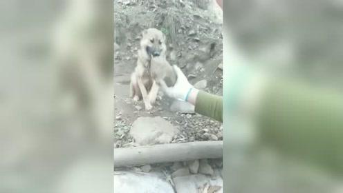 狗子:你是拿我当傻子啊 ,哪块是肉难道我不知道吗