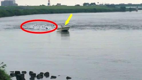 轮船经过江面,水中大鱼瞬间一片沸腾,场面壮观!