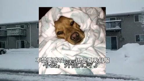 """超强冷空气来袭!美国人怎么取暖?他们痴迷于这个""""中国神器"""""""