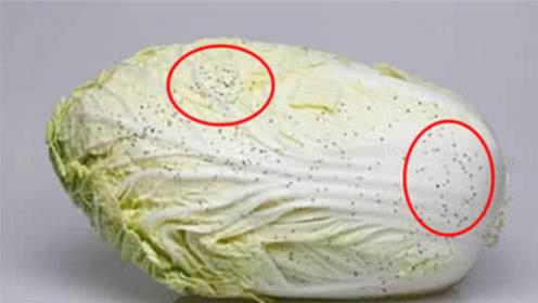 """大白菜上的""""黑点""""到底是什么?这种白菜还能吃吗?后悔知道的晚了"""