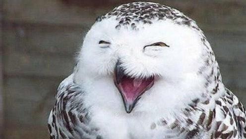 为什么老人临死前,猫头鹰都会在附近笑?原来真不是迷信!