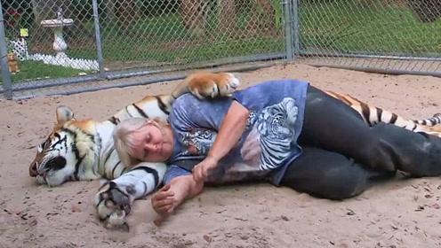 睡在老虎怀里是什么感觉?把老虎当靠枕,你是第一个!
