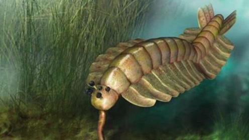 远古时期的5大巨型怪兽,一只虾入榜前三,霸王龙只排倒数第二