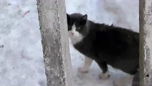 这样的流浪猫爱了!看看四下无人,好想偷偷抱你回家呀