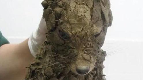 """小伙在泥坑捡到一条""""狗"""",洗干净后吓一跳,网友:这到底经历过啥了?"""