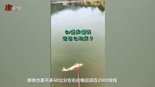 广东一男子用绳子牵住锦鲤 送到河里遛弯 鱼:世界那么大我想去看看