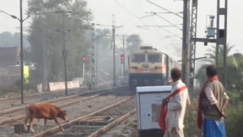 水牛经过火车轨道,不料火车飞啸而来,悲剧发生