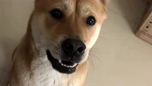都说养狗了就不能吃独食了,我偏不信这个邪,只是狗子笑容会逐渐消失!